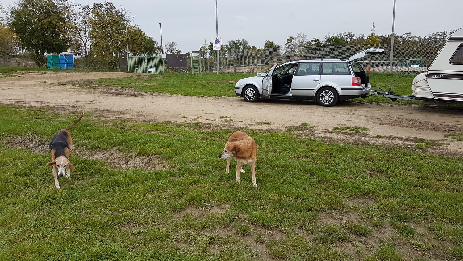 where we park is always a lot of space for the dogs