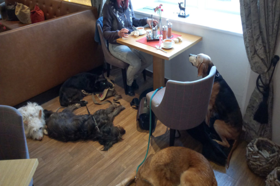 well educated for joining me in a restaurant with other dogs